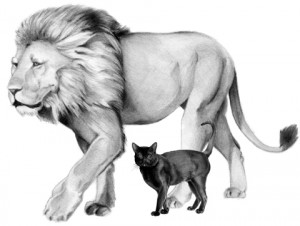 Lion of the Tribe of Judah or a house cat